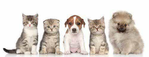 Katzenurin Hundeurin Geruch entfernen