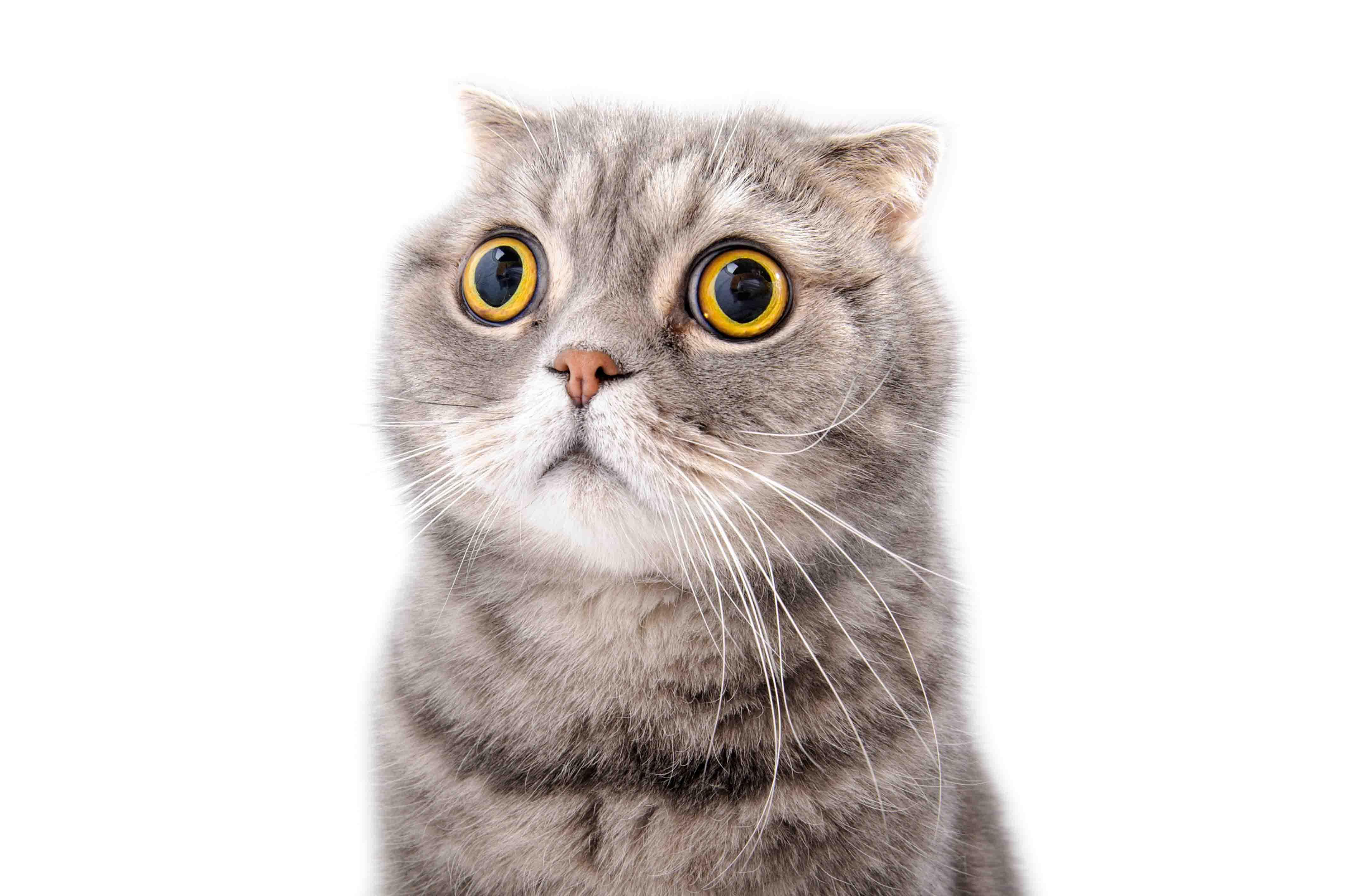 Katzenurin Entfernen Tiergerecht Katzengruch Beseitigen