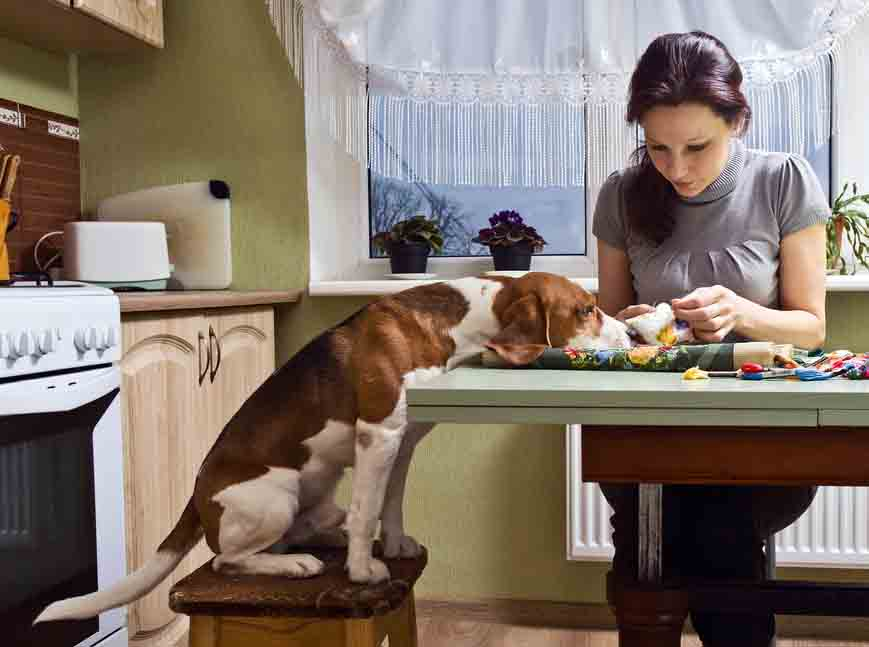 Desinfizierung Tierhaushalt durch richtiges mildes desinfizieren