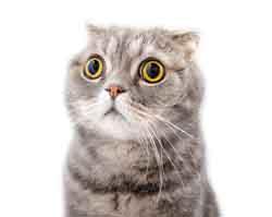 Katzenurin entfernen - Urin Geruch entfernen - Geruchsentferner