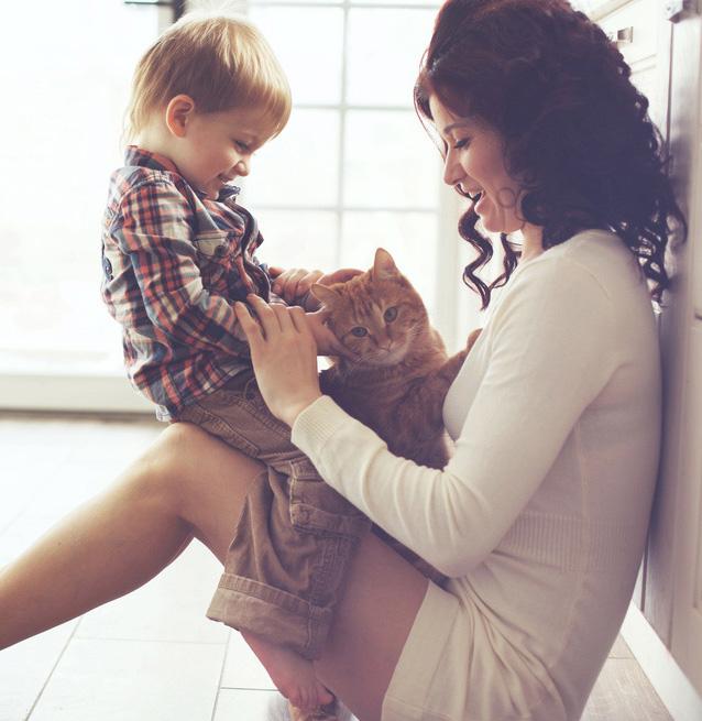 Katzenurin entfernen in Katzenhaushalt ist wichtig und muss tiergerecht erfolgen