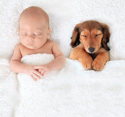 Hunde Welpen ziehen ein