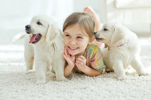 Hundepflege und Hund kaufen