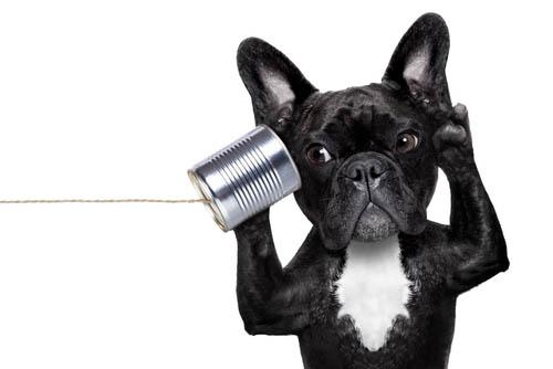 Geruchsneutralisierer Hunde Urin Geruch entfernen