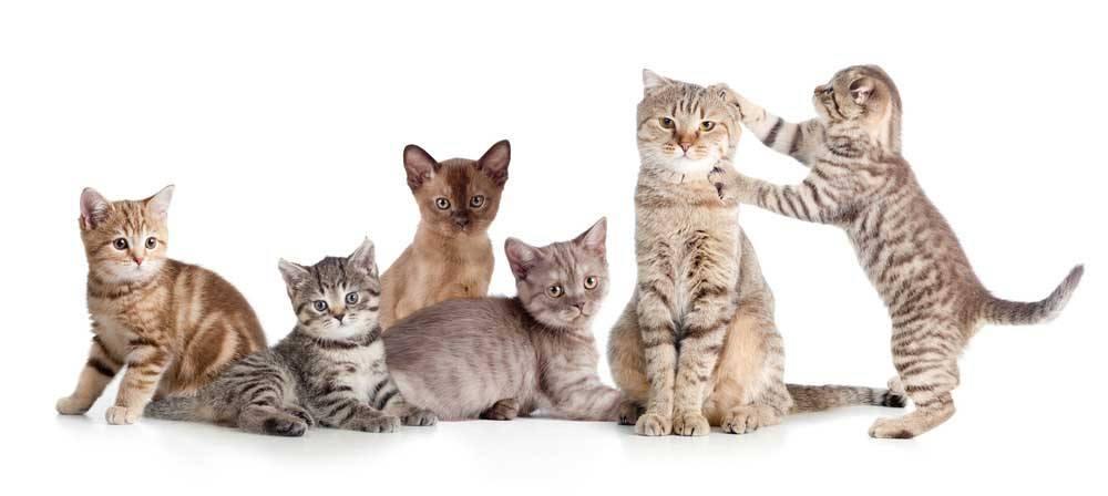 Katzenbabys Katzengeruch Kitten