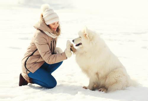 Hundepflege und Hund kaufen sind ein thema