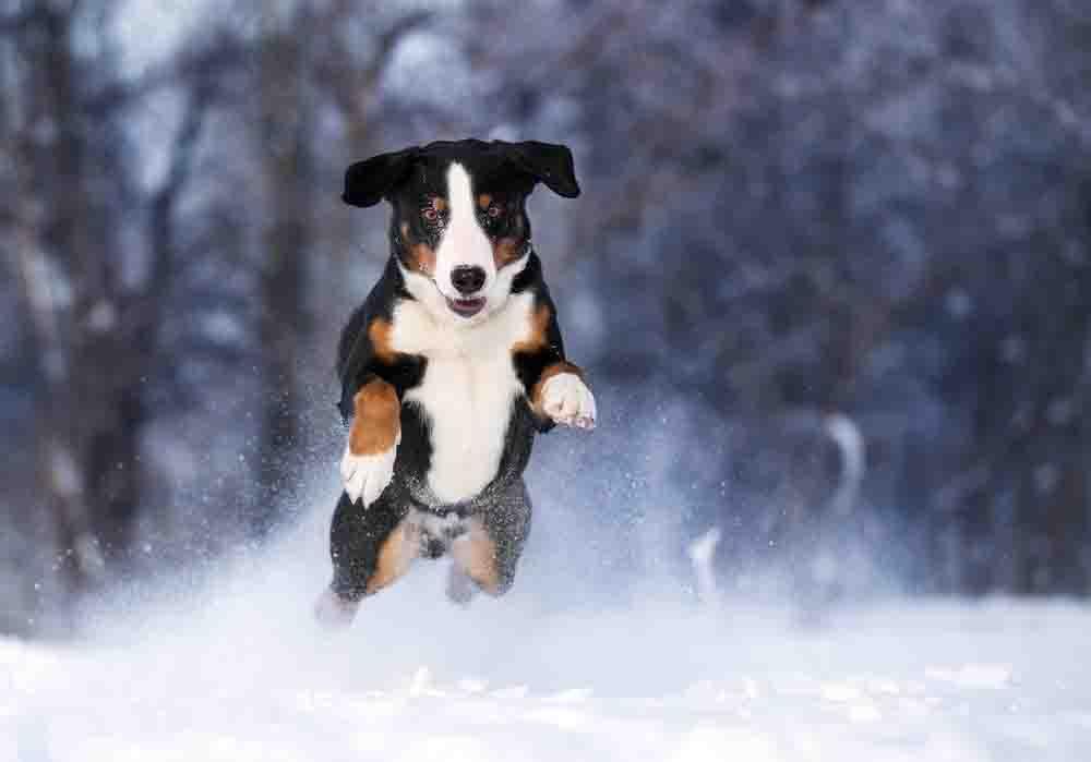 Hundepfoten pflegen