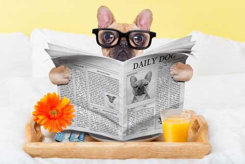 Geruchsneutralisierer-Hunde-Urin-Geruch-entfernen-Geruchsentferner0YKG5dbRxg9R4