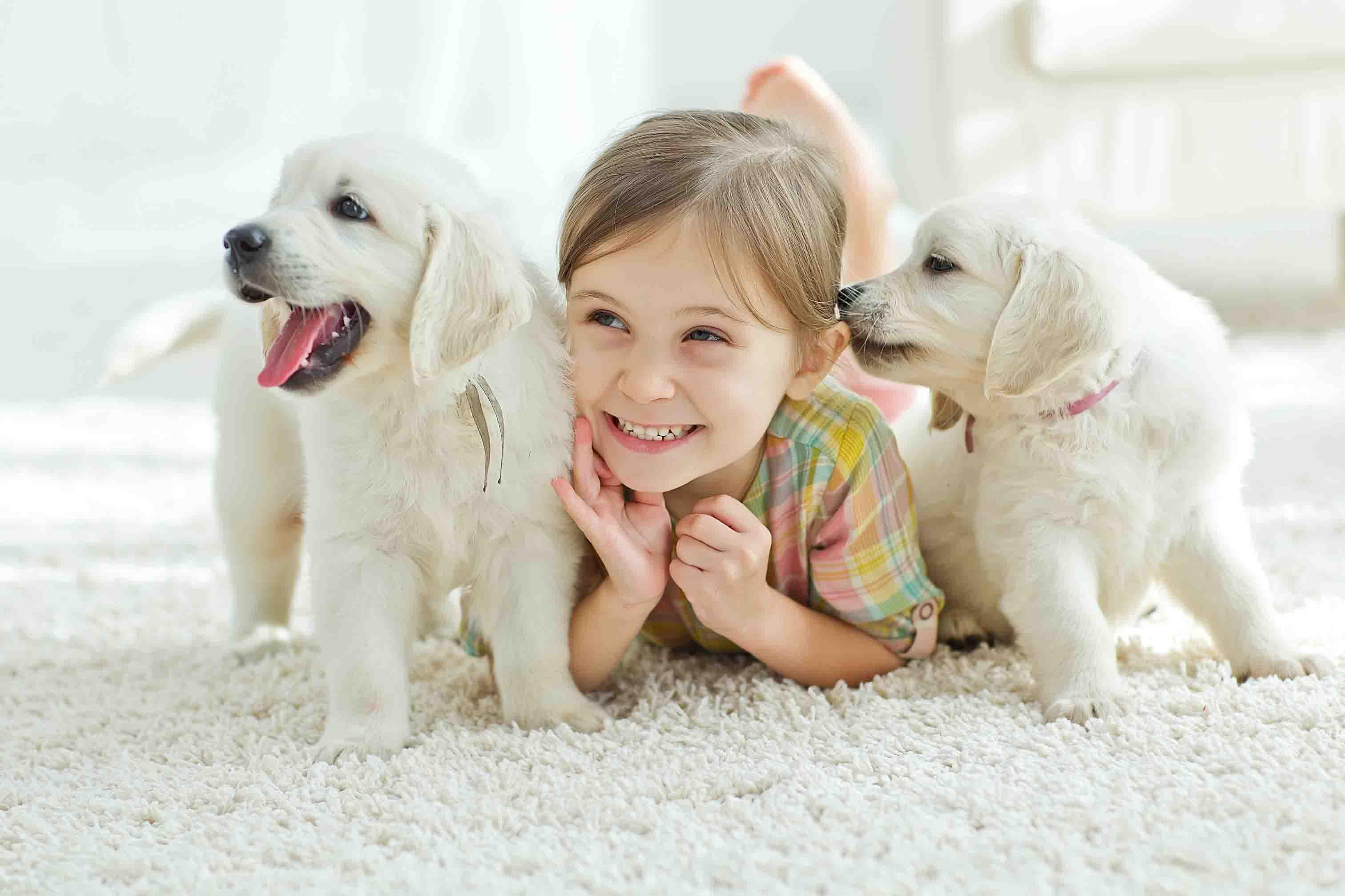 Hundeurin entfernen - Geruchsentferner