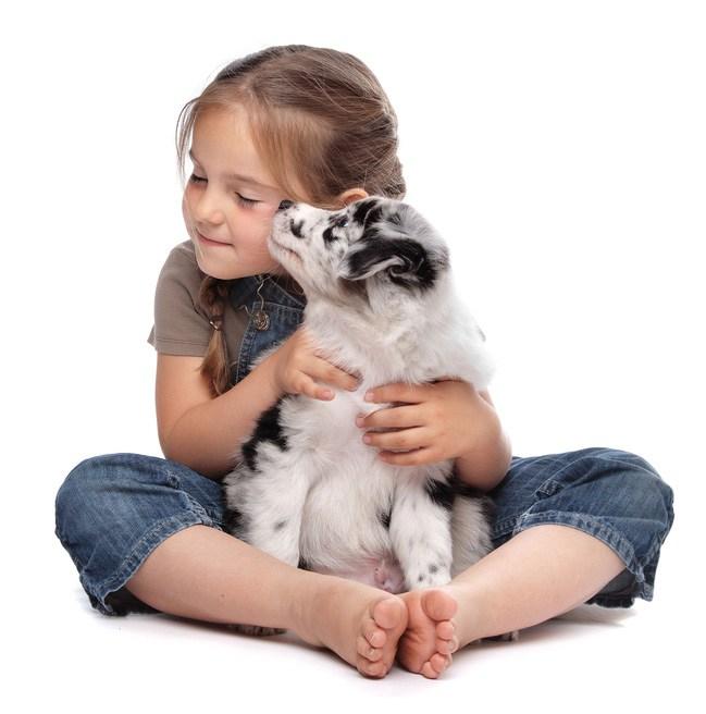 Hundeurin entfernen Geruchsentferner